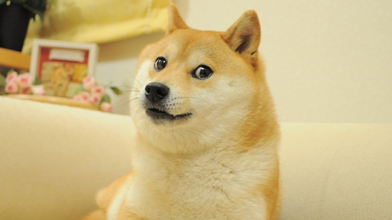 Fractionalizing the Doge NFT, Cryptopunk 543 Gets Chopped and Sold for $1 per Share